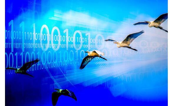 云迁移:通用型平台的优势与短板
