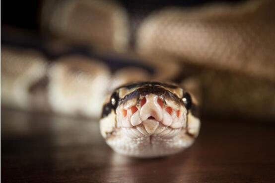 Python进一步扩大优势